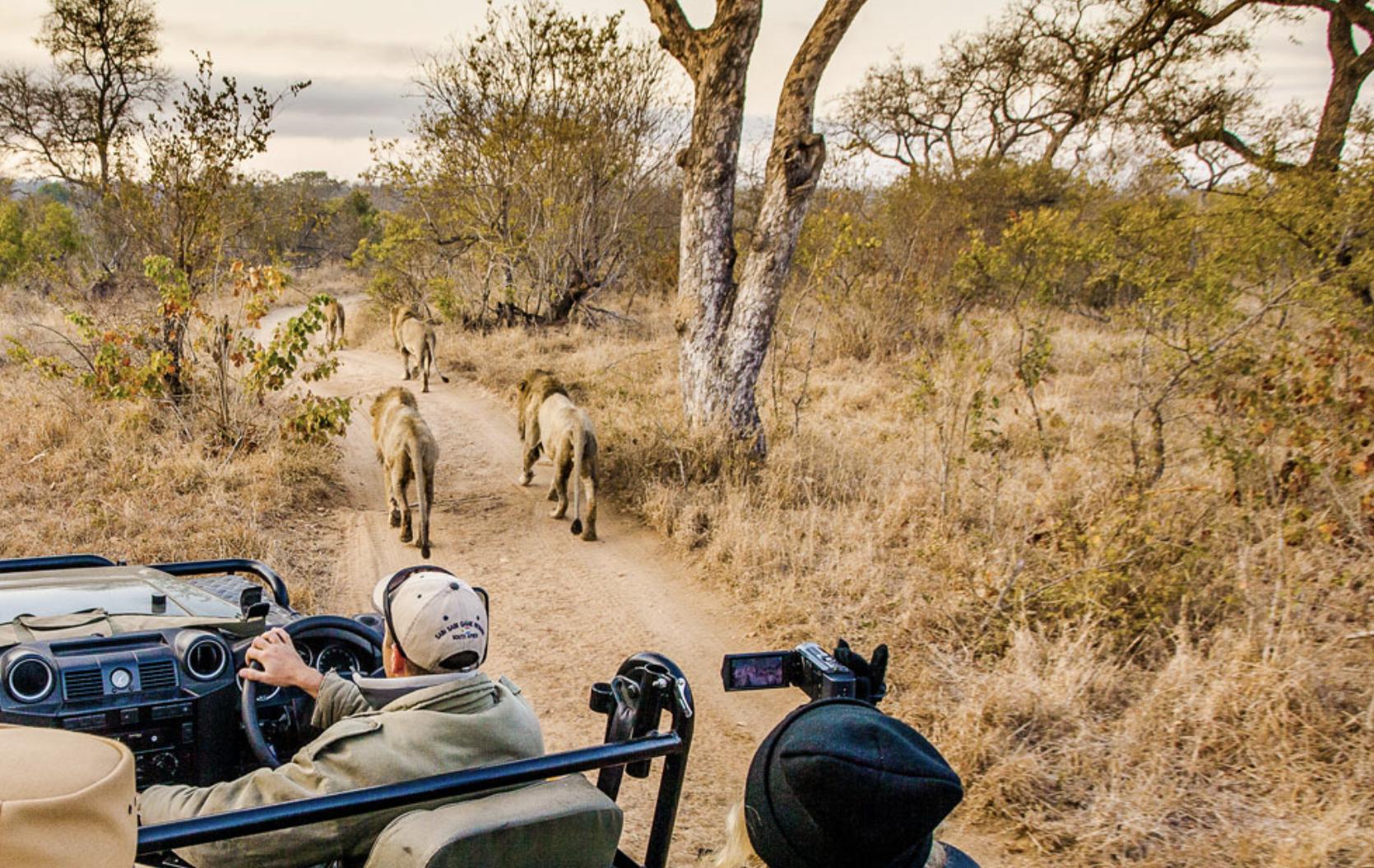 Safari Sudafrica