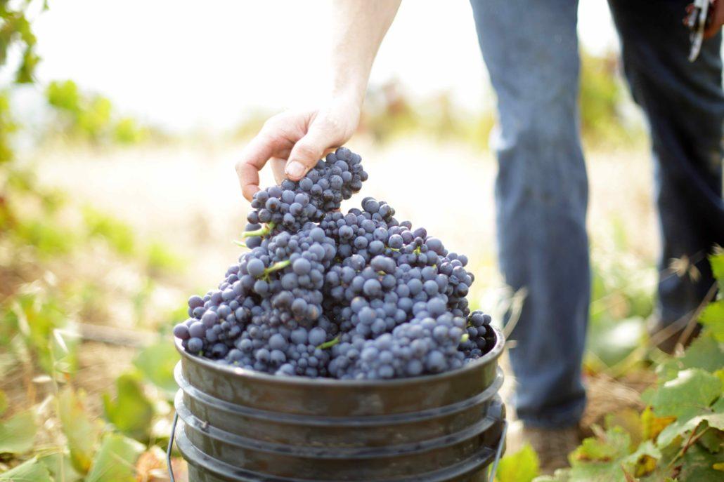 Arnot Roberts - community.wine