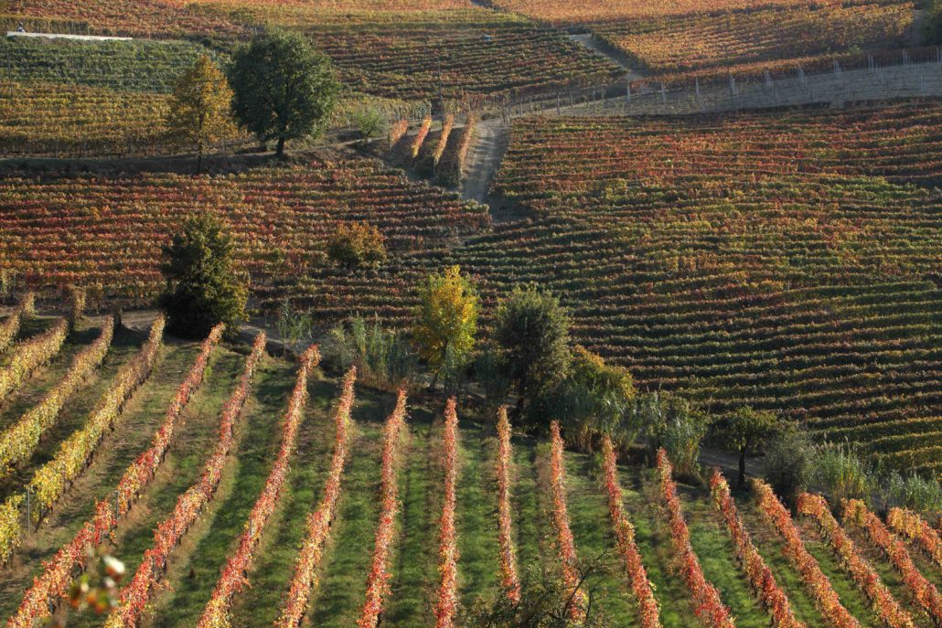 Barbaresco-Community.wine