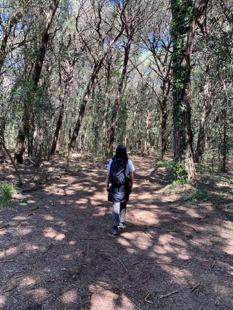 Nella foresta del Parco nazionale